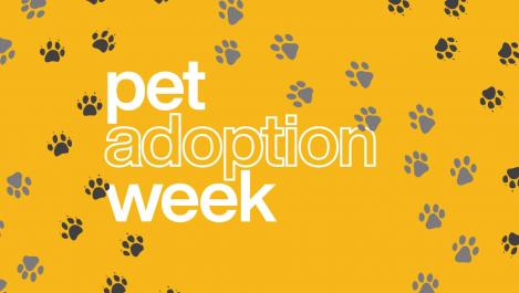 Pet adoption week logo