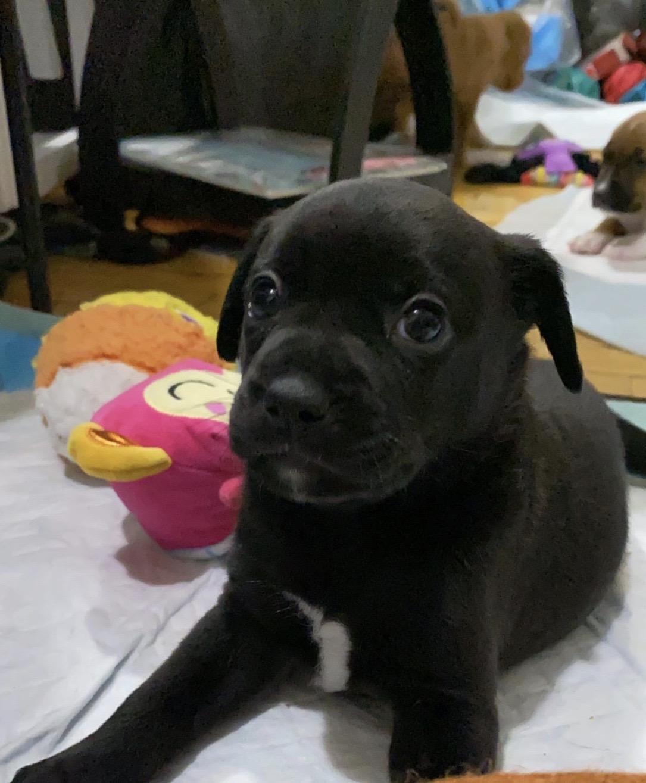 puppy to adopt