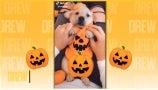 Am Cam: Spooky Pumpkin Puppy