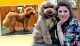 Jess Rona Unveils the Adorable Doggy Makeover She Gave Pup During Show