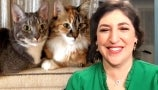 Drew Brings Mayim Bialik a Virtual Cat Cafe After COVID-19 Spoiled Her Dreams of Visiting